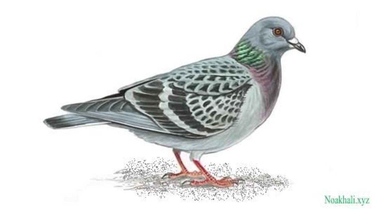 The A-List Birds