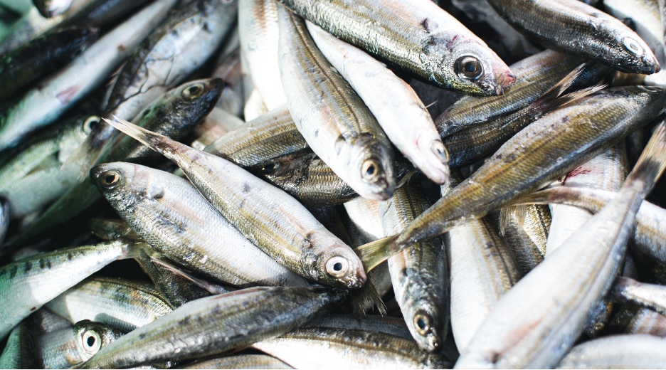 how to start a fishery business